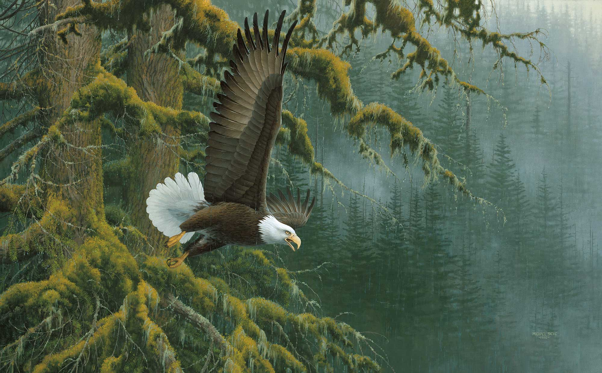 Wildlife Art Misty Forest Bald Eagle Print By Michael Sieve Wild
